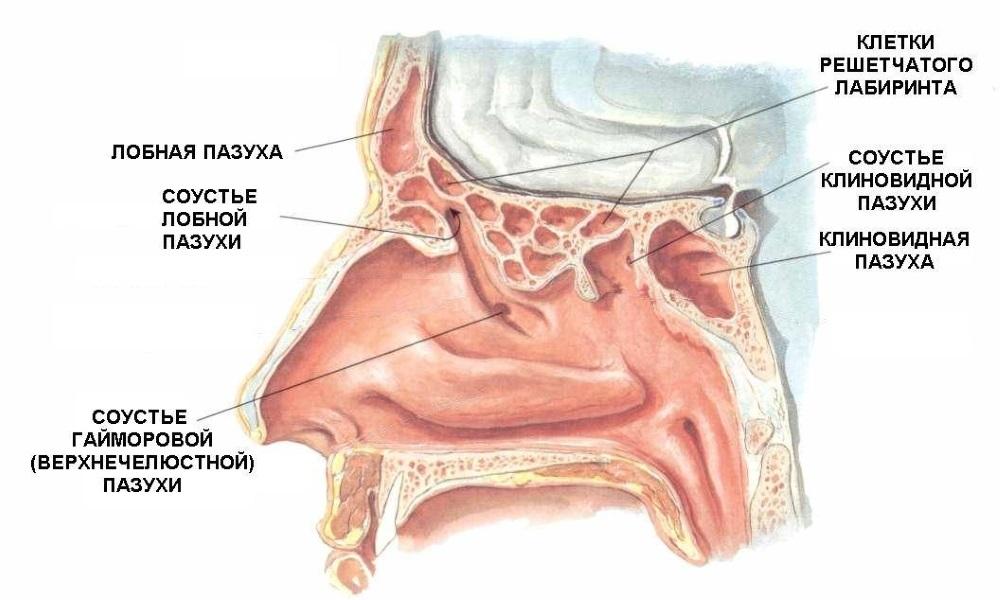 Для чого призначають УЗД пазух носа?