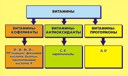 Функція вітамінів як коферментів