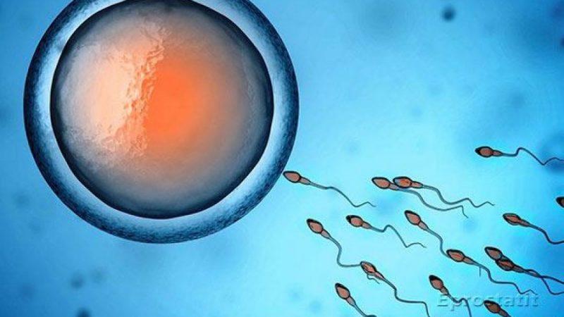 Як поліпшити якість спермограми для зачаття