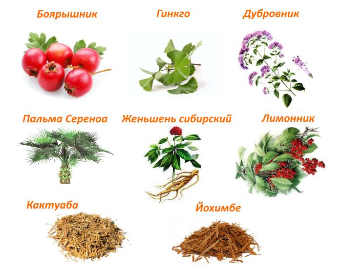 Какие травы от простатита самые эффективные — список