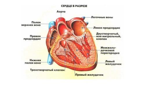 Причини і лікування пороку серця у дітей